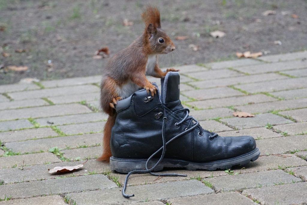 eichörnchen im winterschuh